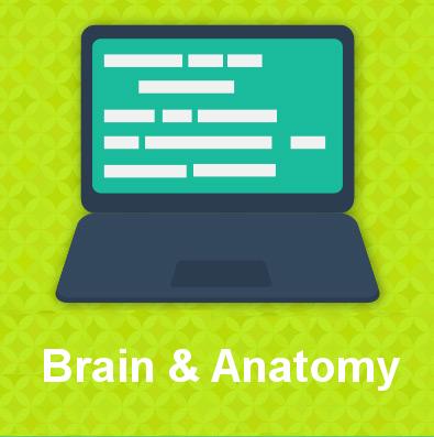 Brain & Anatomy tile